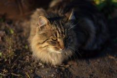 Красивый серый кот в лучах заходящего солнца стоковое изображение