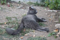 Красивый серый кот в саде Стоковые Изображения RF
