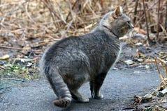 Красивый серый кот стоит на улице около деревянной стены Стоковое Фото