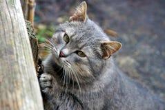 Красивый серый кот стоит на улице около деревянной стены Стоковое фото RF