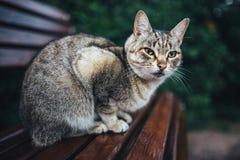 Красивый, серый кот стоковые изображения rf