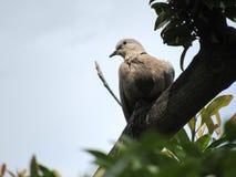 Красивый серый табак нырнул на толстой ветви дерева Стоковые Фотографии RF