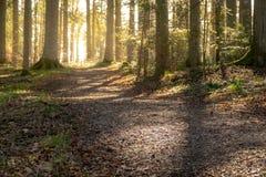 Красивый след леса стоковое фото rf