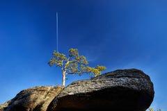 Красивый след сосны и самолета Стоковое Изображение