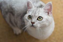 Красивый смотреть кота Стоковые Изображения
