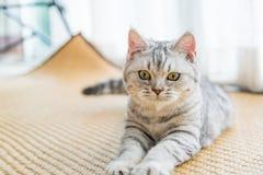Красивый смотреть кота Стоковая Фотография