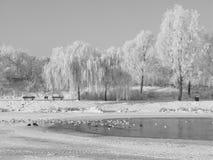 Красивый снег на ветвях дерева Стоковые Фотографии RF