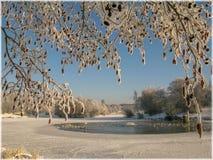 Красивый снег на ветвях дерева Стоковые Изображения