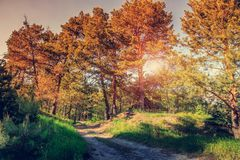 Красивый солнечный день в леса ослеплять солнце выходить ветви стоковые изображения rf