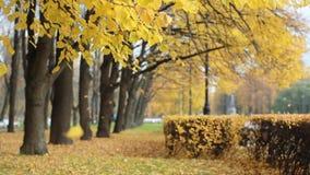Красивый солнечный день - падение в парк осени акции видеоматериалы