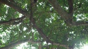 красивый солнечный свет 4K через листья зеленых деревьев на заходе солнца в Тайбэе видеоматериал