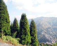 Красивый сосновый лес в Гималаях стоковая фотография rf