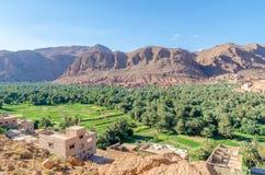 Красивый сочный зеленый оазис с зданиями и горами на ущелье Todra, Марокко, Северной Африке Стоковая Фотография