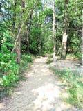 Красивый солнечный свет дороги в лесе в лете Стоковое Изображение RF