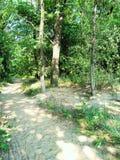 Красивый солнечный свет дороги в лесе в лете Стоковые Фото
