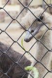 Красивый страус Стоковое Фото