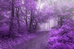 Красивый сюрреалистический след леса сказки в туман Стоковая Фотография