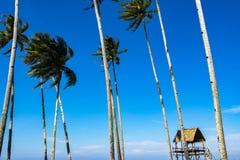 Красивый тропический вид на море под ярким солнечным днем, хатой, кокосом Стоковая Фотография