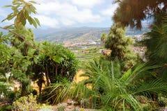 Красивый тропический сад с пальмами и цветками стоковые фотографии rf