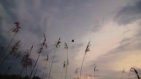 Красивый трудолюбивый паук соткет сеть на природе акции видеоматериалы