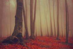 Красивый туманный лес Стоковое Изображение