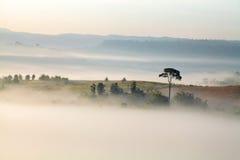 Красивый туман пейзажа горы на Khao-kho Phetchabun, Таиланде Стоковая Фотография