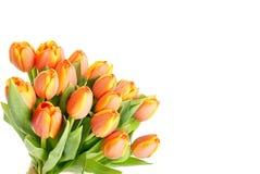 Красивый тюльпан цветков Стоковые Изображения