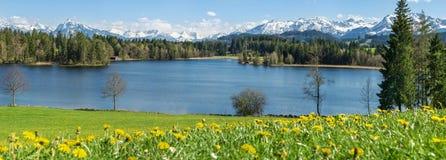 Красивый луг цветка на береге и снеге озера покрыл горы Стоковые Фото