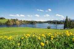 Красивый луг цветка на береге и снеге озера покрыл горы Стоковые Фотографии RF