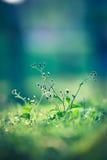 Красивый луг Стоковое Фото