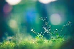 Красивый луг Стоковые Фото