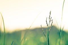 Красивый луг Стоковая Фотография RF