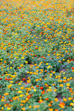 Красивый луг wildflowers Стоковое фото RF