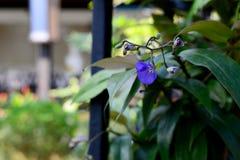 Красивый фиолетового цветка стоковые фотографии rf