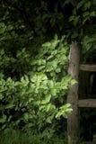 Красивый художнический sunlit деревянный столб загородки в сочном английском coun Стоковая Фотография