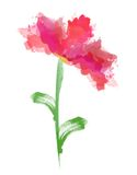 Красивый цветок акварели Стоковые Фотографии RF