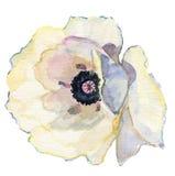Красивый цветок акварели Стоковое Изображение