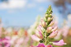 Красивый цветок букета в саде Стоковая Фотография