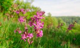 Красивый цветок весной Стоковые Фотографии RF