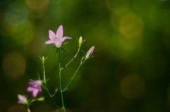 Красивый цветок весной стоковые изображения rf