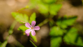 Красивый цветок весной Стоковая Фотография RF