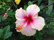 Красивый цветок весны с водой падений Стоковое Изображение
