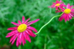 Красивый цветок в макросе Стоковые Фото