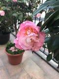 Красивый цветок стоковые изображения rf