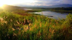 красивый цветок в озере Стоковые Изображения