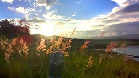 красивый цветок в озере Стоковое Изображение
