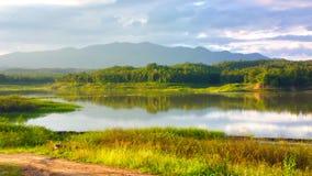 красивый цветок в озере Стоковая Фотография