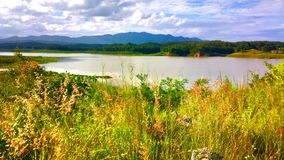 красивый цветок в озере Стоковые Фотографии RF