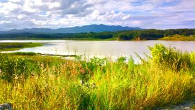 красивый цветок в озере Стоковые Изображения RF