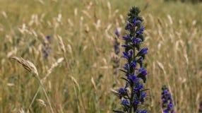 Красивый цветок в поле Ординарность синяка стоковые изображения